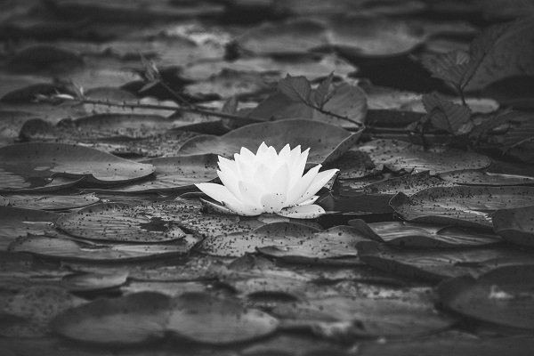 sacred unity as a benefit of the power of silence